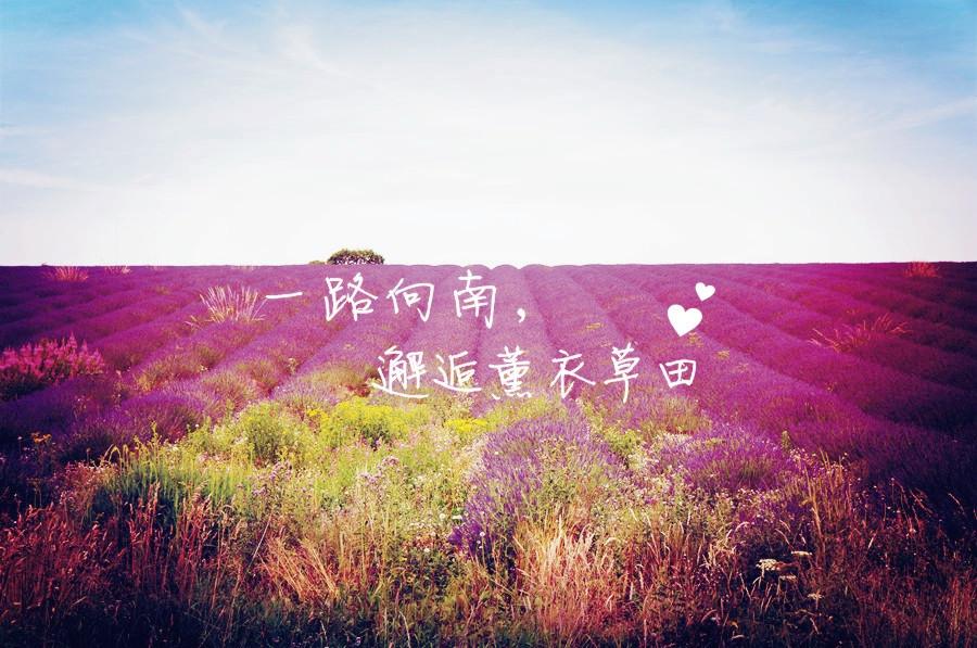 红领巾出游团 | 7月让我们一起去看薰衣草(已结束)