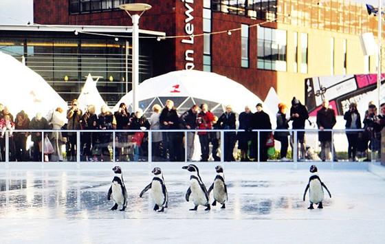 利物浦溜冰场