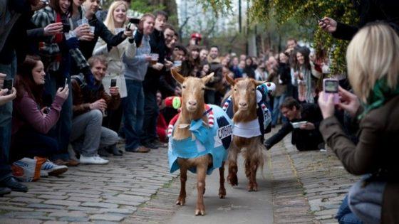 牛津剑桥山羊比赛