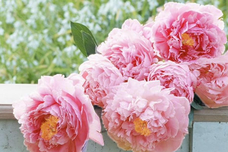 Appleyard Flowers | 高颜值鲜花满30镑立减10镑!相当于67折哦!现在正是芍药季!